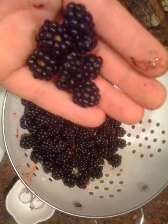 BlackBerry Boulder Creek