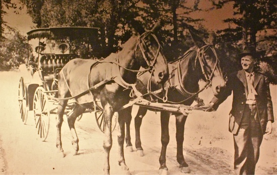 Horse Buggy and Carriage