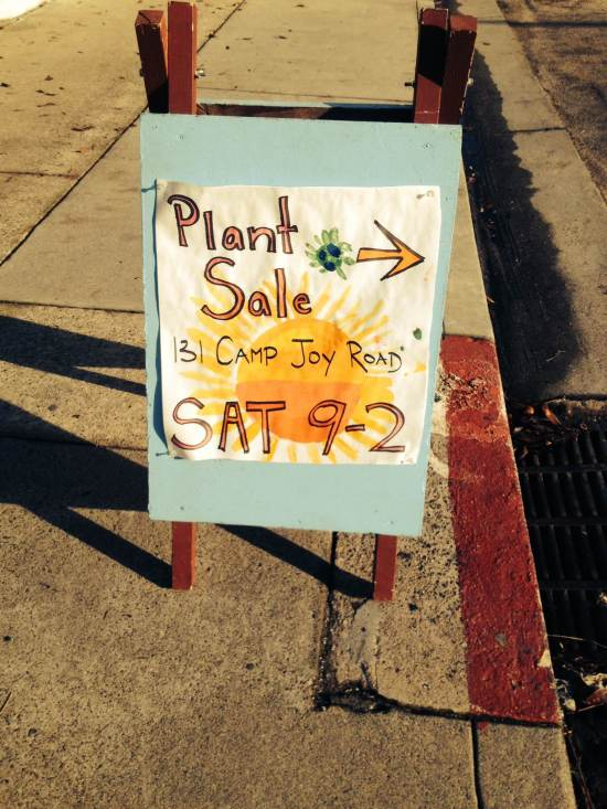 camp joy plant sale boulder creek