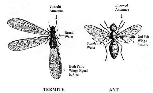 ants_vs_termites
