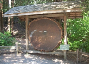 BigBasin-TreeRings